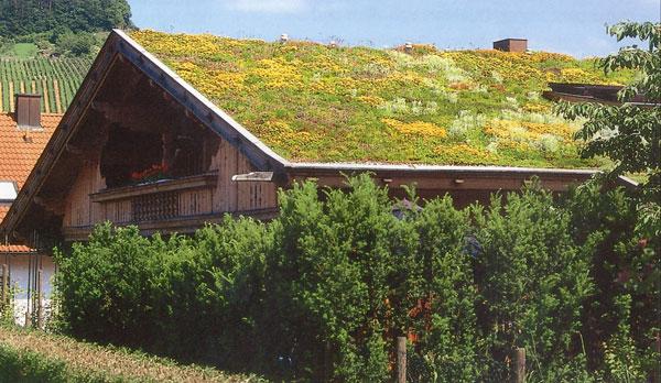 Il tetto - giardino pensile